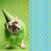 Szalvéta parti kutya